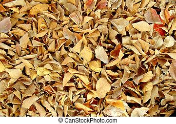 suchy, liście