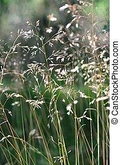 suchy, obsiewa trawą