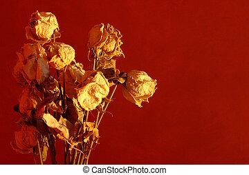 suchy, róże
