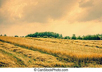 suchy, rolniczy, krajobraz, pole
