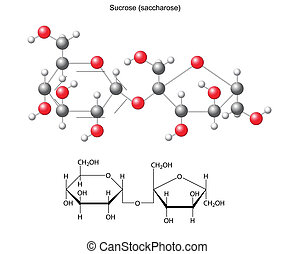 Structural chemical formula and model of sucrose (saccharose), 2D and 3D illustration, vector, isolated on white background, eps8