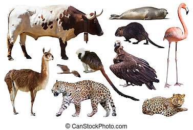 sud americano, bianco, animali