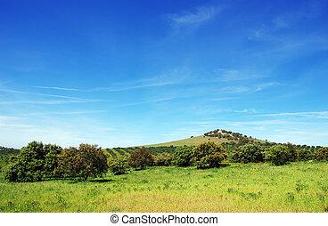 sud, chêne, portugal., arbres, forêt