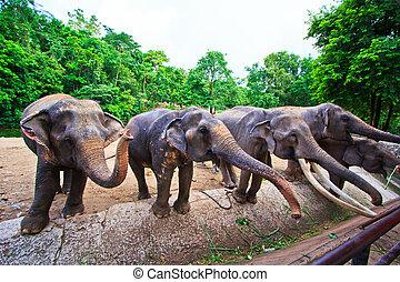 sud-est, elefante, asia, tailandia
