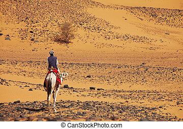Sudanese camel rider - Sudanese men ride camel