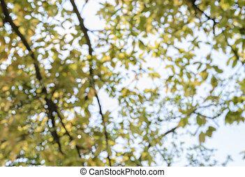suddig avbild, av, träd löv, bakgrund