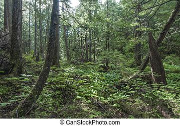 sudeste, alaska, bosque