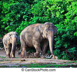 sudeste, elefante, asia, tailandia