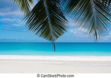 sueño, playa blanca, arenas