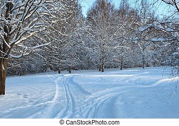 sueco, rastros, esqui, floresta