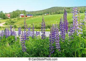sueco, rural, verano, paisaje