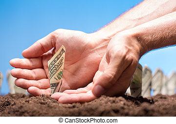 suelo, dólares, norteamericano, crecer