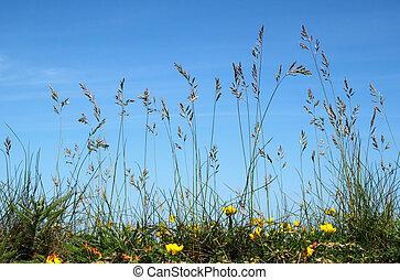 suelo, vista, de, natural, largo, salvaje, grass.