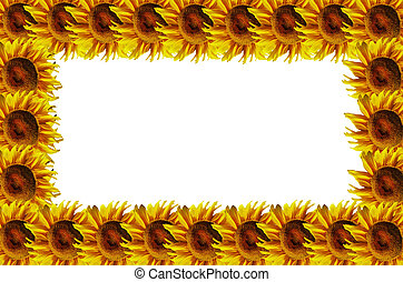 Suflowers abstract frame