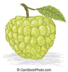 closeup illustration of fresh custard apple isolated in white background.