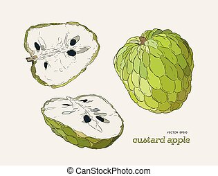 Sugar-apple hand drawn illustration vector set.