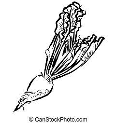 Sugar beet Sketch Vegetables Outline Vector Artwork, Hand...