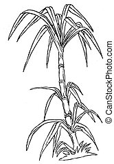 Sugar cane Clip Art and Stock Illustrations. 74 new images ...