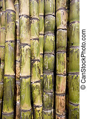 Sugar cane close-up