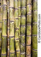 Sugar cane close-up