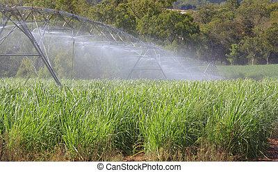 sugar cane irrigation