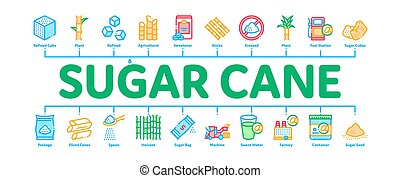 Sugar Cane Minimal Infographic Banner Vector