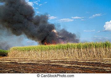 sugar cane plantation and fire