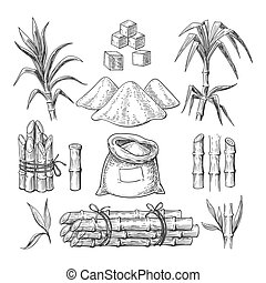 Sugar cane sketch