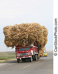 An oversized load of raw sugar cane is transported down a coastal highway in Peru