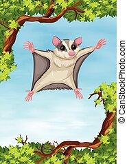 Sugar glider flying on the tree