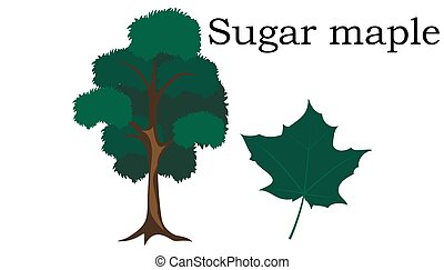 Sugar maple Trees vector element. vector icon green