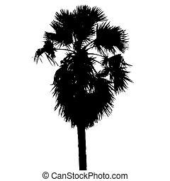 Sugar palm silhouette vector