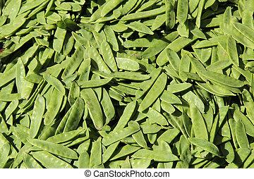 Sugar snap peas in sunlight