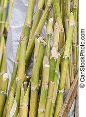 Sugarcane bagasse, source of sweet sugar for food and nature fiber recycle for biofuel pulp and building materials.