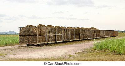 sugarcane, corte, cheio, trilho, caixas