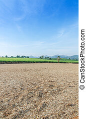 Sugarcane field agriculture tropical farm landscape