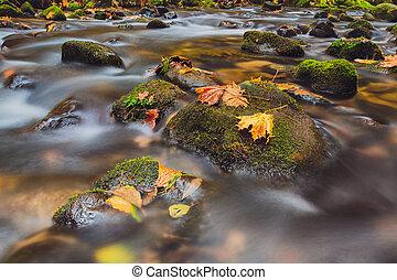 suisse, automne, bohémien, rivière, kamenice