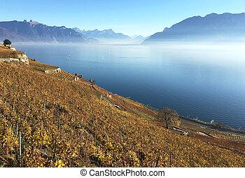 suisse, vignobles, région, lavaux