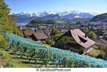 suisse, vignobles, spiez
