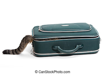 Suitcase with tail - Cat sits in a suitcase and you only see...