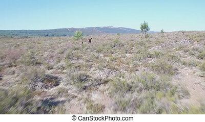 suivre, courir mâle, douceur, deers