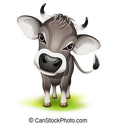 suizo, poco, vaca