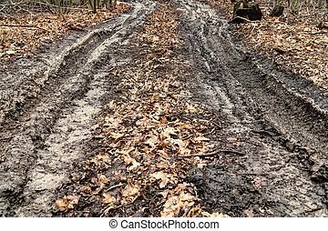 sujo, outono, estrada, em, floresta
