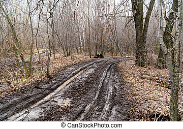 sujo, outono, estrada, em, um, floresta