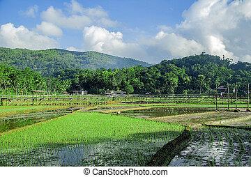 sukorame rice field, a bridge made of bamboo