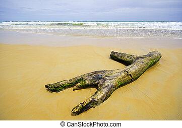sul, phuket, praia, registro, tailandia
