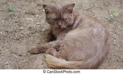 sullen cat