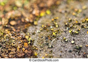 sulphide, (fes2), marcasite, orthorhombic, kristall, eisen, ...