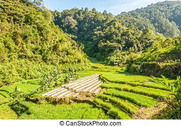 Sumatra Nature - Indonesia