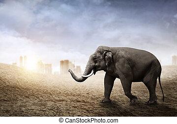 sumatran, elefant, woestijn, wandeling